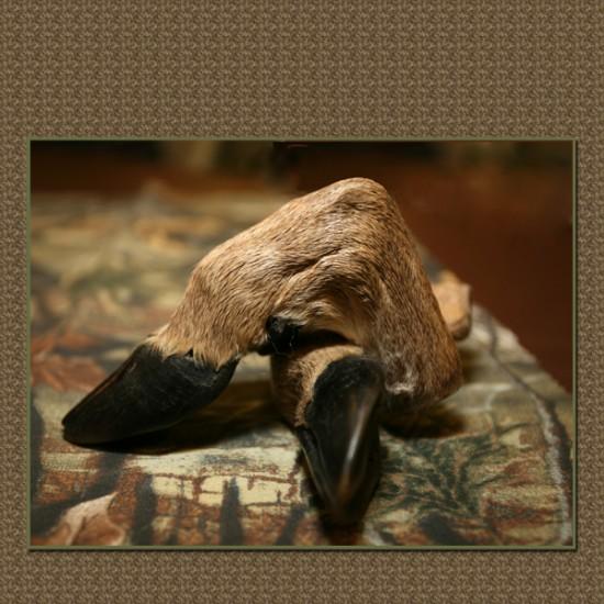 deer-paw-blog