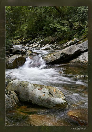 # smokey mountains #fall # sally Kolar Photography